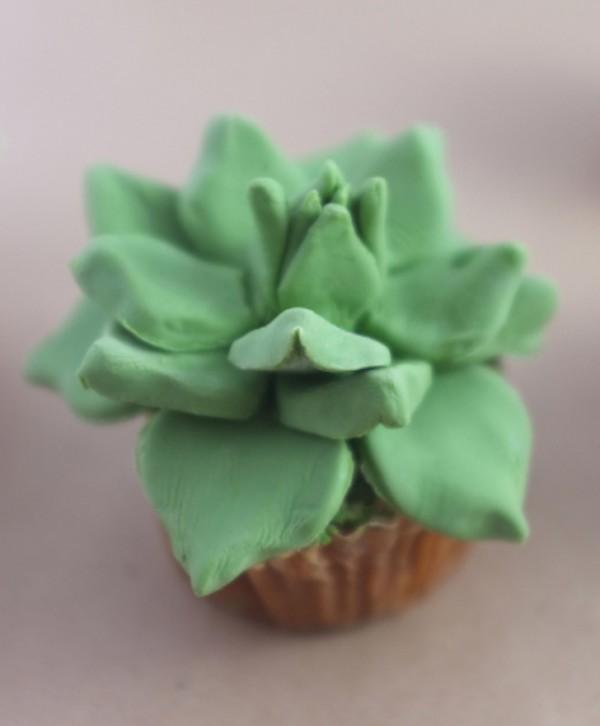 House-Plant-Cactus-Cupcakes-6